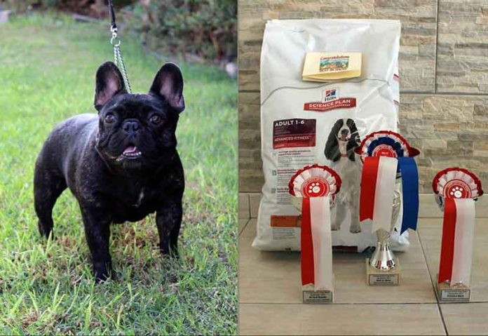 Caring Canines Dog Show
